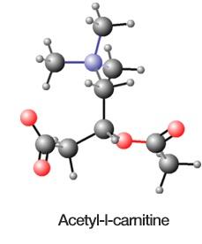 l-carnitine pour maigrir