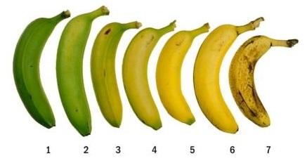 banane plantain pour maigrir