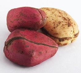 La noix de cola, un ingrédient de la composition Anaca 3