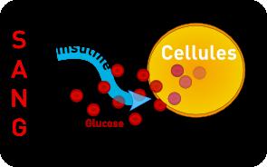 insuline-cellule