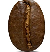 Caféine présente pour améliorer la dégradation des graisses
