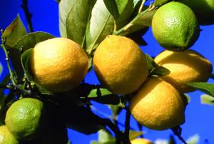 Jus detox maison à base de citron