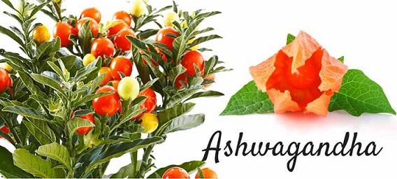 Ashwagandha avis