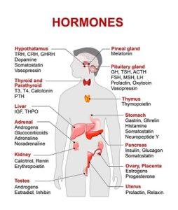 Hormone qui fait perdre du poids